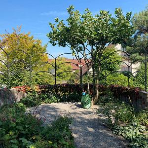 Rankgerüste für Garten